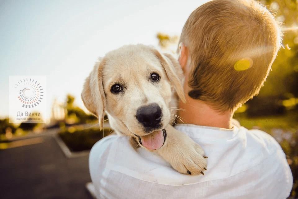 Новые правила выгула собак в Подмосковье