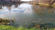 Глазынинский пруд