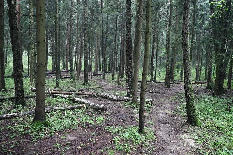 Лес в мкр. Супонево Звенигород
